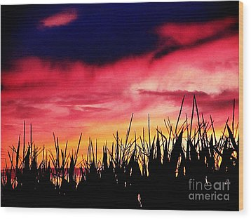 Sunset 365 62 Wood Print by Tina M Wenger