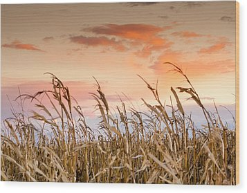 Sunset Against The Cornstalks Wood Print