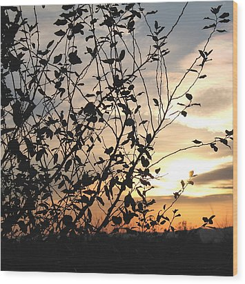 Wood Print featuring the photograph Sunset And Nature's Silhouette by Candice Trimble