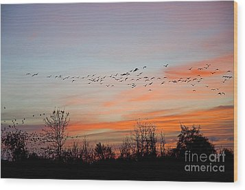 Sunset At Ankeny Wildlife Refuge Wood Print by Nick  Boren