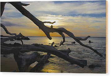 Driftwood At Sunset On Beach '69 Wood Print by Venetia Featherstone-Witty