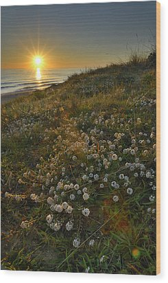 Sunset At The Beach  White Flowers On The Sand Wood Print by Guido Montanes Castillo