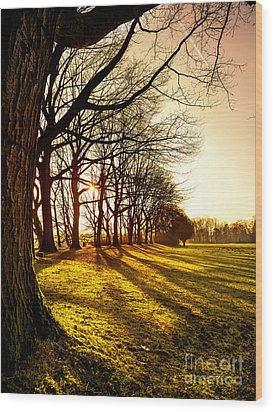Sunset At The Park Wood Print