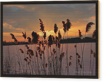 Wood Print featuring the photograph Sunset At The Pond 3 by Michaela Preston