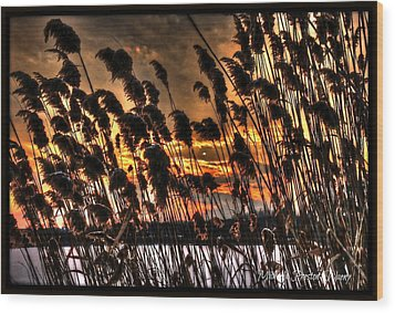 Wood Print featuring the photograph Sunset At The Pond 5 by Michaela Preston