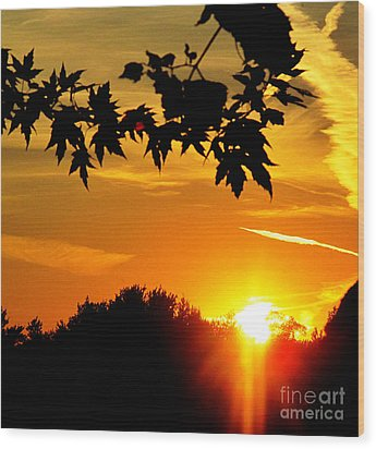 sunset AUSTIN Wood Print by Tina M Wenger