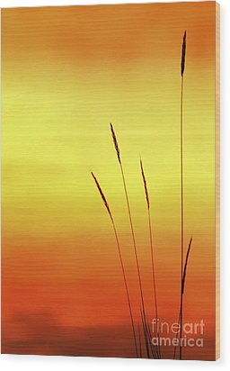 Sunset Wood Print by Christopher Mace