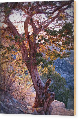Sunset Colors Of A Juniper Tree Wood Print