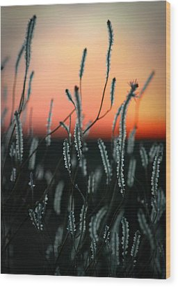 Sunset Desert Wood Print by Henry Kowalski