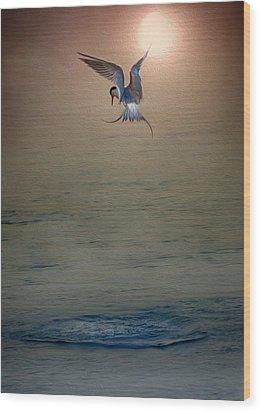Sunset Dive Wood Print