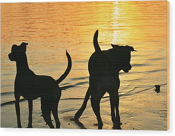 Sunset Dogs  Wood Print by Laura Fasulo