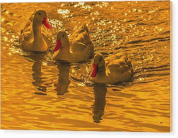 Sunset Ducks Wood Print by Brian Stevens