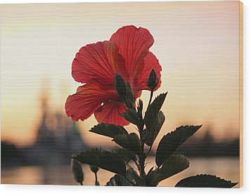 Wood Print featuring the photograph Sunset Flower by Cynthia Guinn