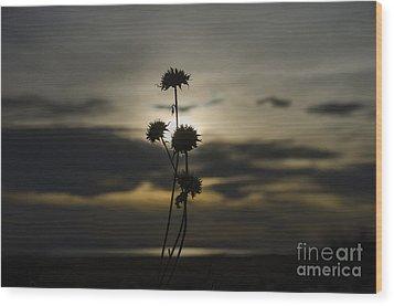 Sunset Flower Wood Print by Nicole Markmann Nelson