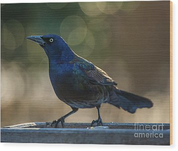 Sunset Grackle Wood Print