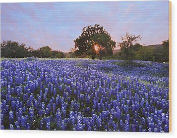 Sunset In Bluebonnet Field Wood Print