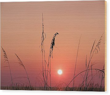 Sunset In Tall Grass Wood Print by Bill Cannon