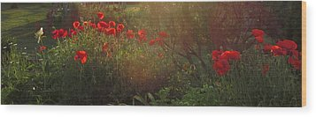 Sunset In The Poppy Garden Wood Print by Mary Wolf