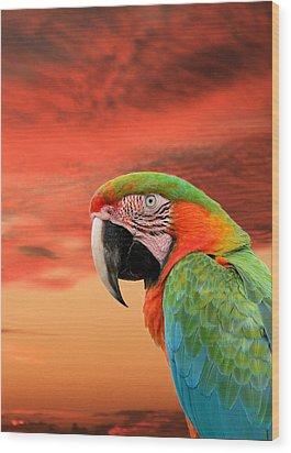 Sunset In The Tropics Wood Print
