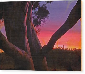 Sunset Madrone 3 Wood Print