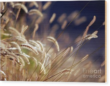 Wood Print featuring the photograph Sunset On Autumn Grass by Lincoln Rogers