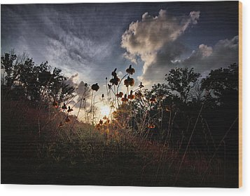 Sunset On Daisy Wood Print by Linda Unger