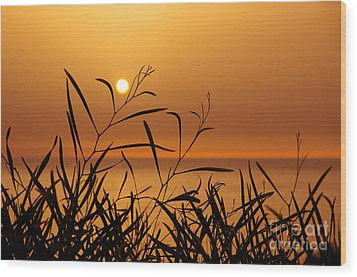 Sunset On Leaves  Wood Print by Carlos Caetano
