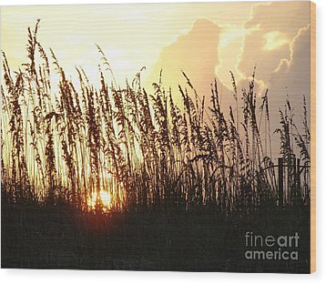 Sunset On The Dunes St. Augustine Wood Print