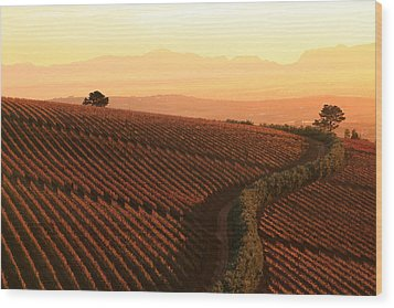 Sunset Over The Vineyards Wood Print by Riana Van Staden