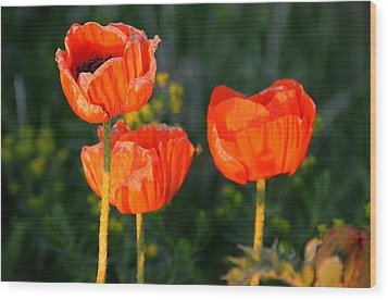 Sunset Poppies Wood Print by Debbie Oppermann