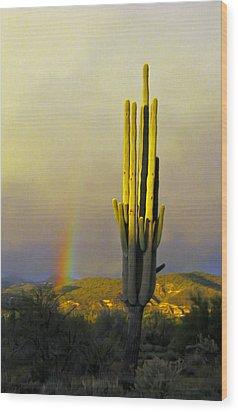 Sunset Rainbow Cactus Wood Print by John Haldane