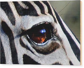 Sunset Reflected In Zebra's Eye    Wood Print