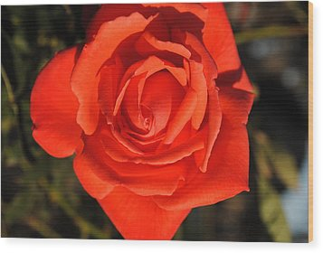 Sunset Rose Wood Print