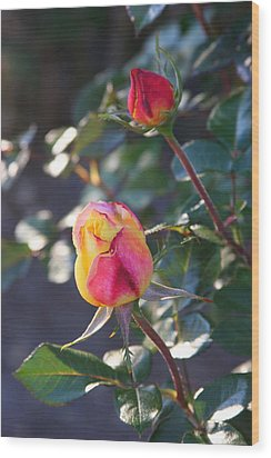 Sunset Roses Wood Print by Paula Tohline Calhoun
