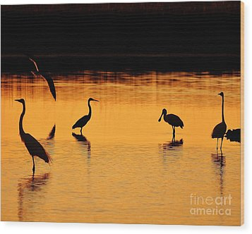 Sunset Silhouette Wood Print by Al Powell Photography USA