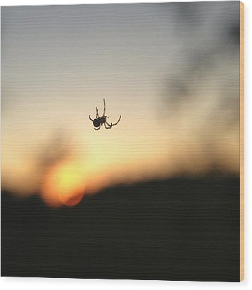 Wood Print featuring the photograph Sunset Spidey by Nikki McInnes