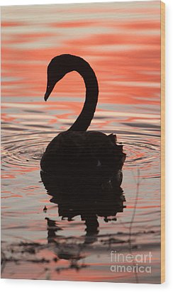 Sunset Swan Wood Print