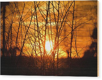 Sunset Through The Brush Wood Print