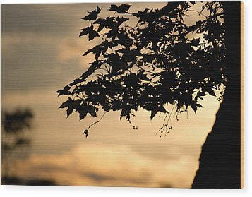 Wood Print featuring the photograph Sunset Through The Trees by John Hoey