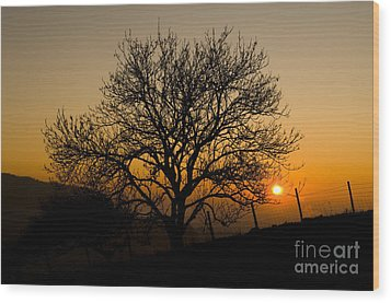Sunset Tree Wood Print by Anne Gilbert