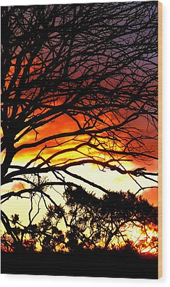Sunset Tree Silhouette Wood Print by The Creative Minds Art and Photography