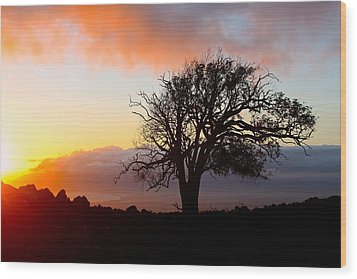 Sunset Tree In Maui Wood Print by Venetia Featherstone-Witty