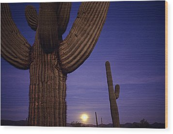 Sunset With Moonise Behind Saguaro Cactus In Desert Southwest Ar Wood Print