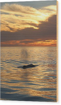 Sunset Wonder Wood Print