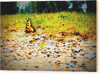 Sunshine Butterfly Wood Print