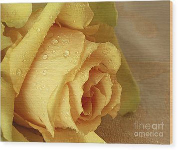 Sunshine Delight Yellow Rose Wood Print by Inspired Nature Photography Fine Art Photography