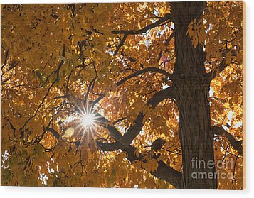 Sunshine Gold Wood Print