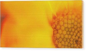 Sunshine Haiku  Wood Print by Lisa Knechtel