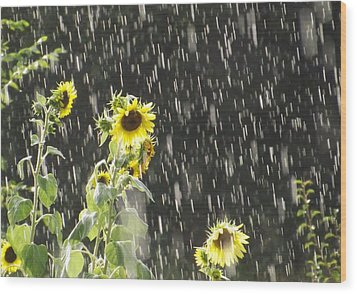 Sunshine In The Rain 2 Wood Print