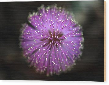 Wood Print featuring the photograph Sunshine Mimosa by Greg Allore